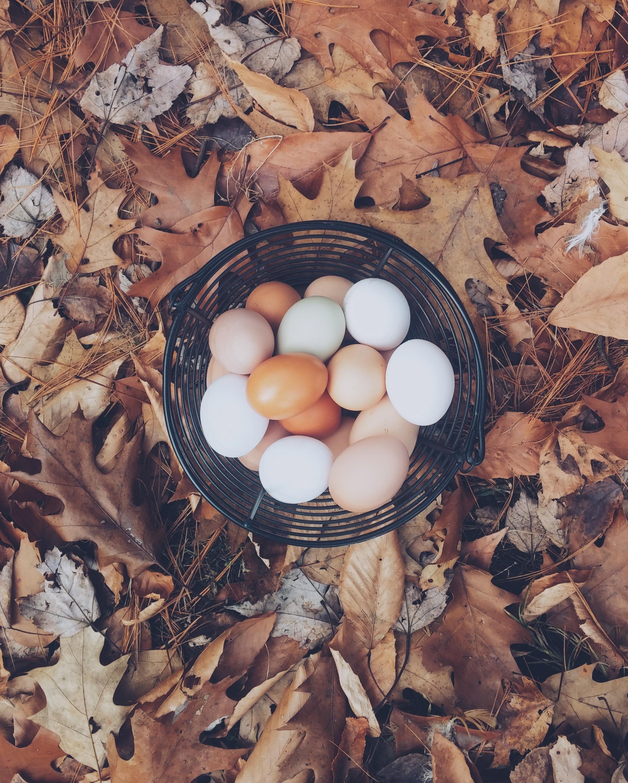 autumn-mott-45386-unsplash